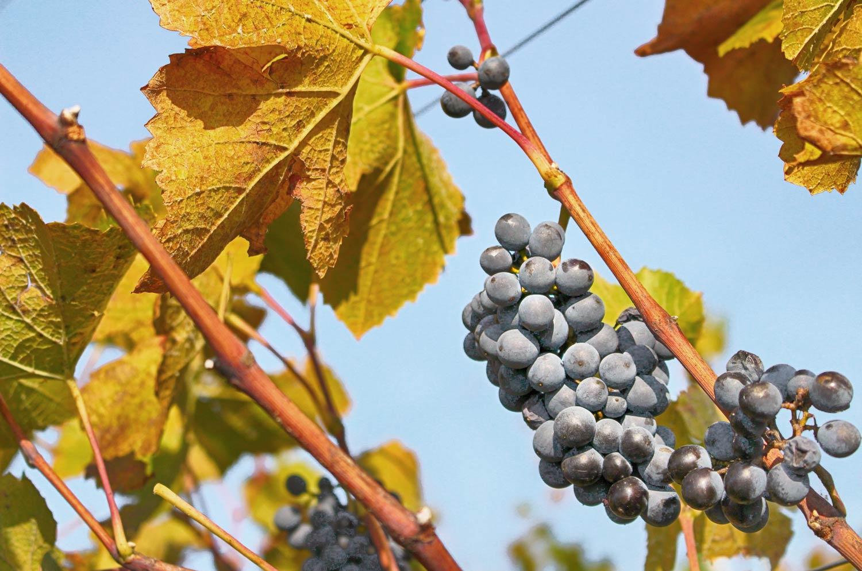 Weinlesefest-Herbst-Gamlitz
